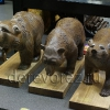 Медведи6