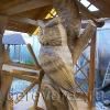 Домик на колодец с совами