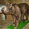Медведь-9