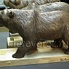 Медведи9
