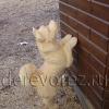 Собака-2